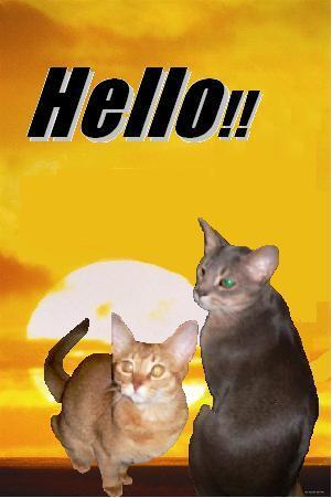アビ&ナナ Hello!!.JPG