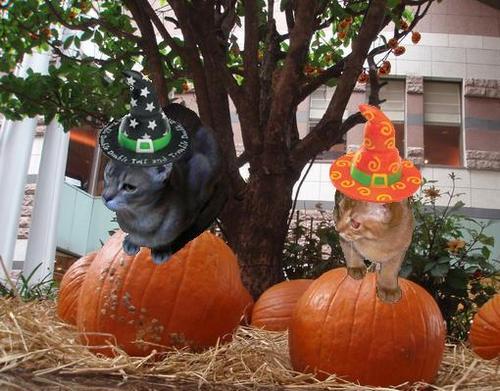 halloweenアビナナ.jpg