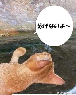 no swimming2.jpg
