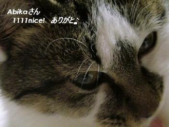 m_1111nice![1].jpg